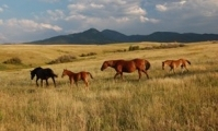 Mount Ellis Horses - Brett Fagan Photo